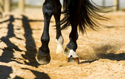 horse hooves in sand arena