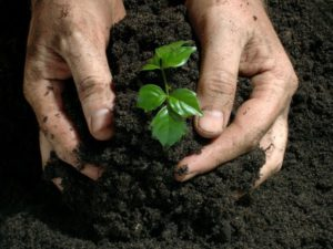 potassium humane fertilizer usage