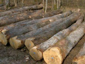 Hardwood logs 5
