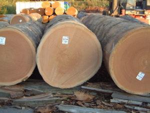 Hardwood logs 4